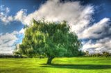 1,000 Islands Tree