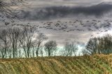 Autumn Grey Sky And Geese