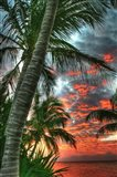 Key West Palm Sunrise Vertical