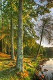 Lakeside Vertical