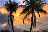 Key West Two Palm Sunrise