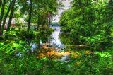 Pond Cove