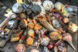 Shells III