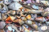 Shells IV