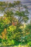 Spring Trees Vertical
