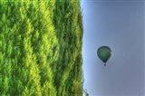 Tuscan Cedar and Balloon