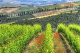 Tuscan Wine Rows