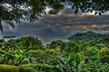 Lush View