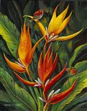 Heliconia Augusta