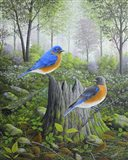 Spring Bluebirds