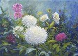 White & Pink Blooms
