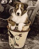 Potted Pup