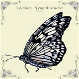 Butterfly Lydiae Nymphaliide Profile