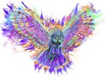 Electric Owl 1