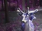 Purple Deer