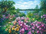 Harbor Roses