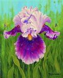 Dewdrop Iris