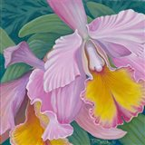 Orchid Series 4