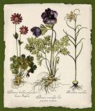 Botanica Nostalgia II