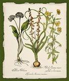 Botanica Nostalgia