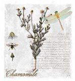 Botanical Garden Chamomile Herb