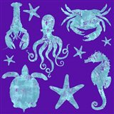 Sponge Marine Life Grouping