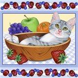 Fruit Bowl Kitten