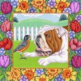 Robin Bulldog