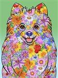 Flowers Pomeranian