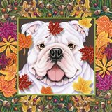 Autumn Bulldog