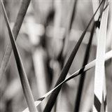 Leaves BW 2