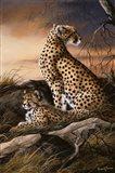 Cheetahs Of Dusk