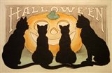 Halloween Black Cats Pumpkin