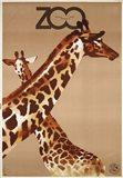 Giraffe Zoo Poland