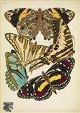 Papillons 5