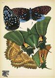 Papillons 6