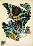 Papillons 7