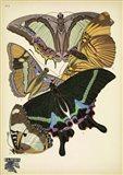Papillons 8
