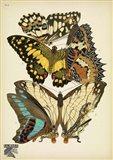 Papillons 9