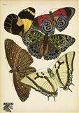 Papillons 12