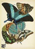 Papillons 13
