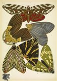 Papillons 14