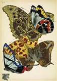 Papillons 15