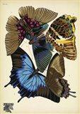 Papillons 16