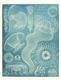 Jellyfish Sealife