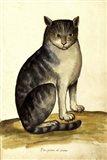 Felis Syriacus Ulisse Aldrovani (1522 -1605)