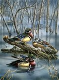 Misty Woodducks