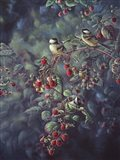 Red Raspberries And Chickadees