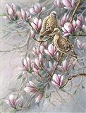Doves And Magnoilas