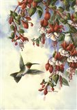 Hummingbird D